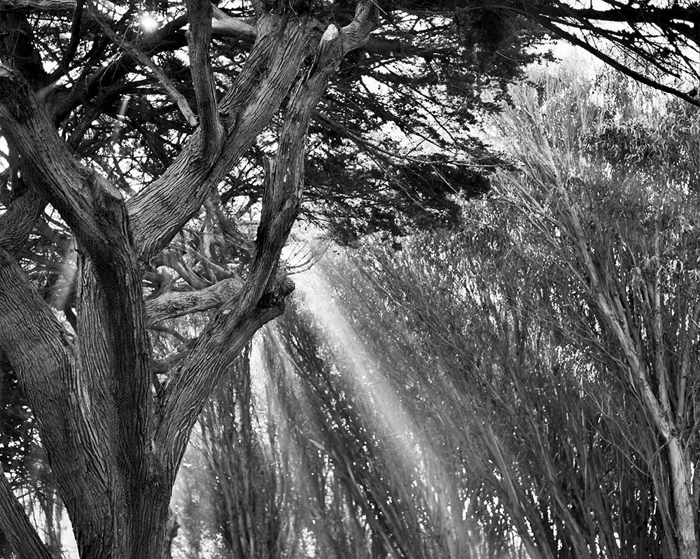 San Francisco, California. March 2014.