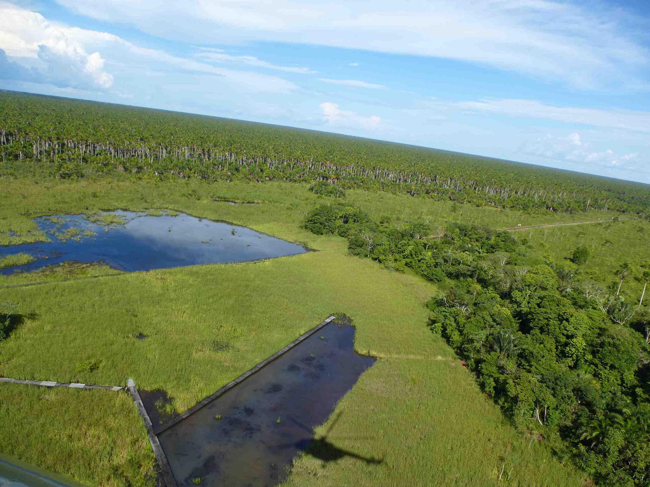 An ariel shot of contaminated lagoons in Pacaya Samiria