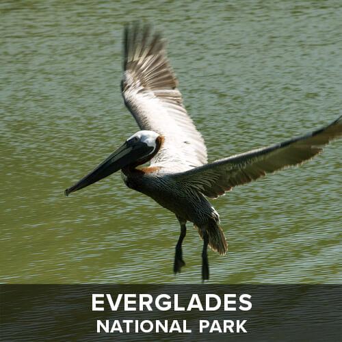 thumb_Everglades.jpg