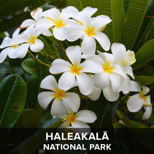 thumb_Haleakala.jpg