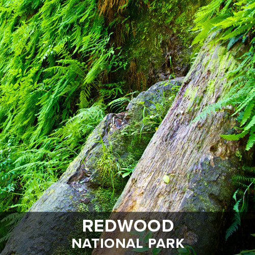 thumb_Redwood.jpg