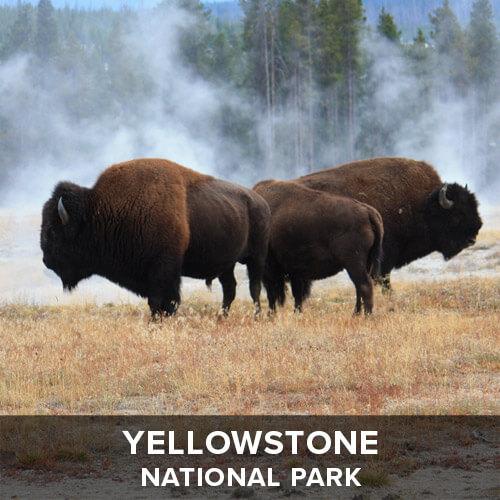 thumb_Yellowstone.jpg