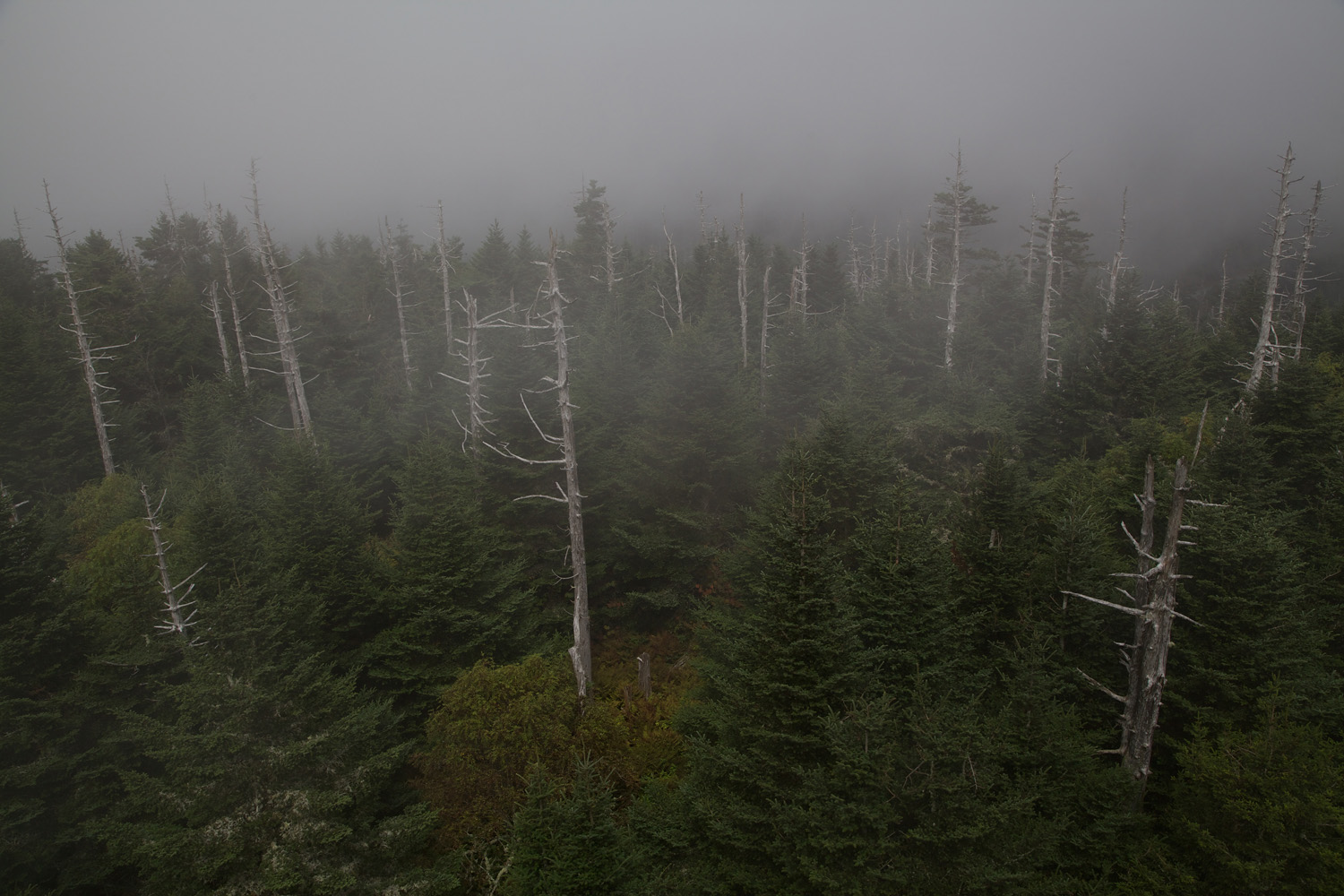 Foggy forest from Clingman's Dome Observation Tower