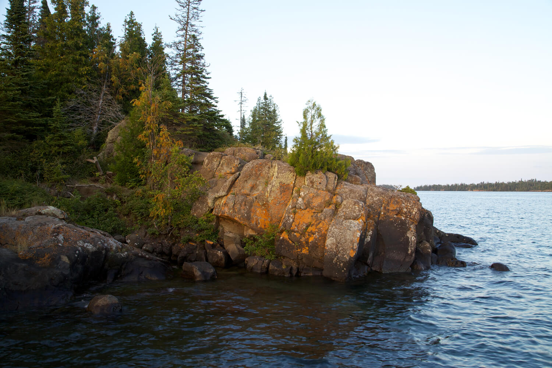 Colorful lichen bloom on coastal rocks.