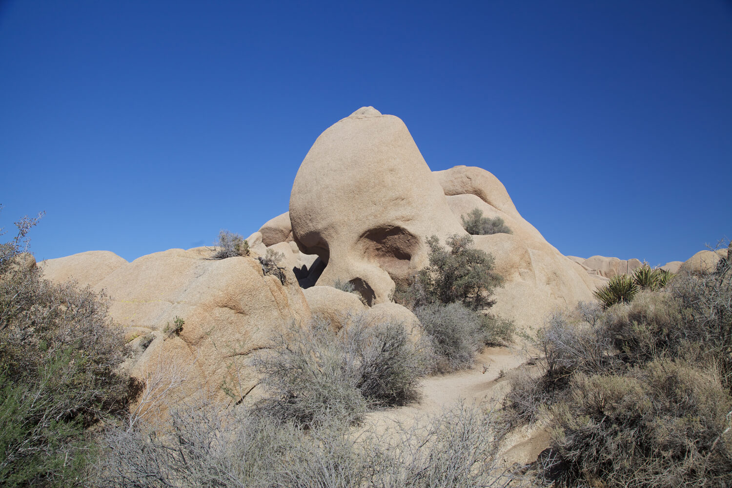 Skull Rock located in he Jumbo Rocks district.