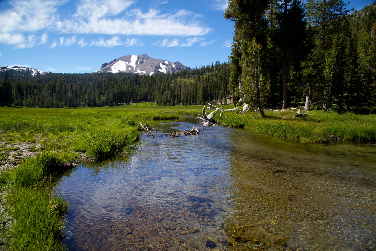 Lassen Meadow copy.jpg