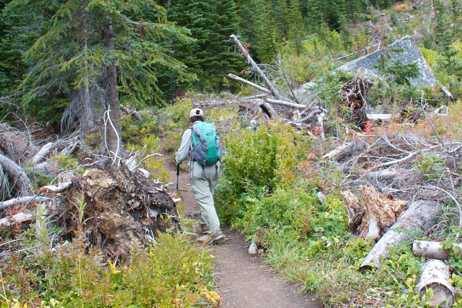 Terry trekking North Cascades on our  20t h park visit.