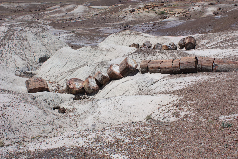 Well preserved petrified log