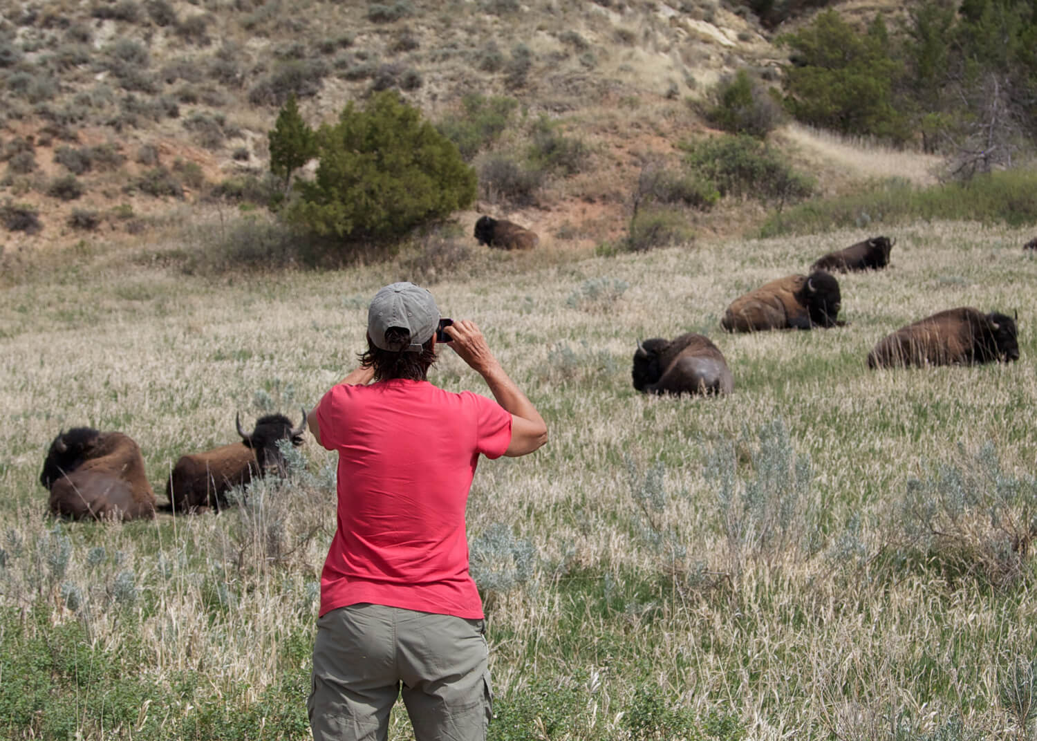 """Terry """"shooting"""" bison on our  36th  park visit."""