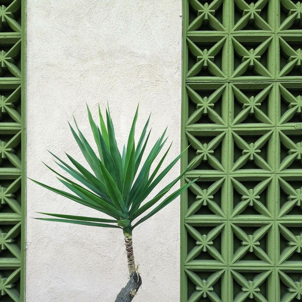 Palm Façade