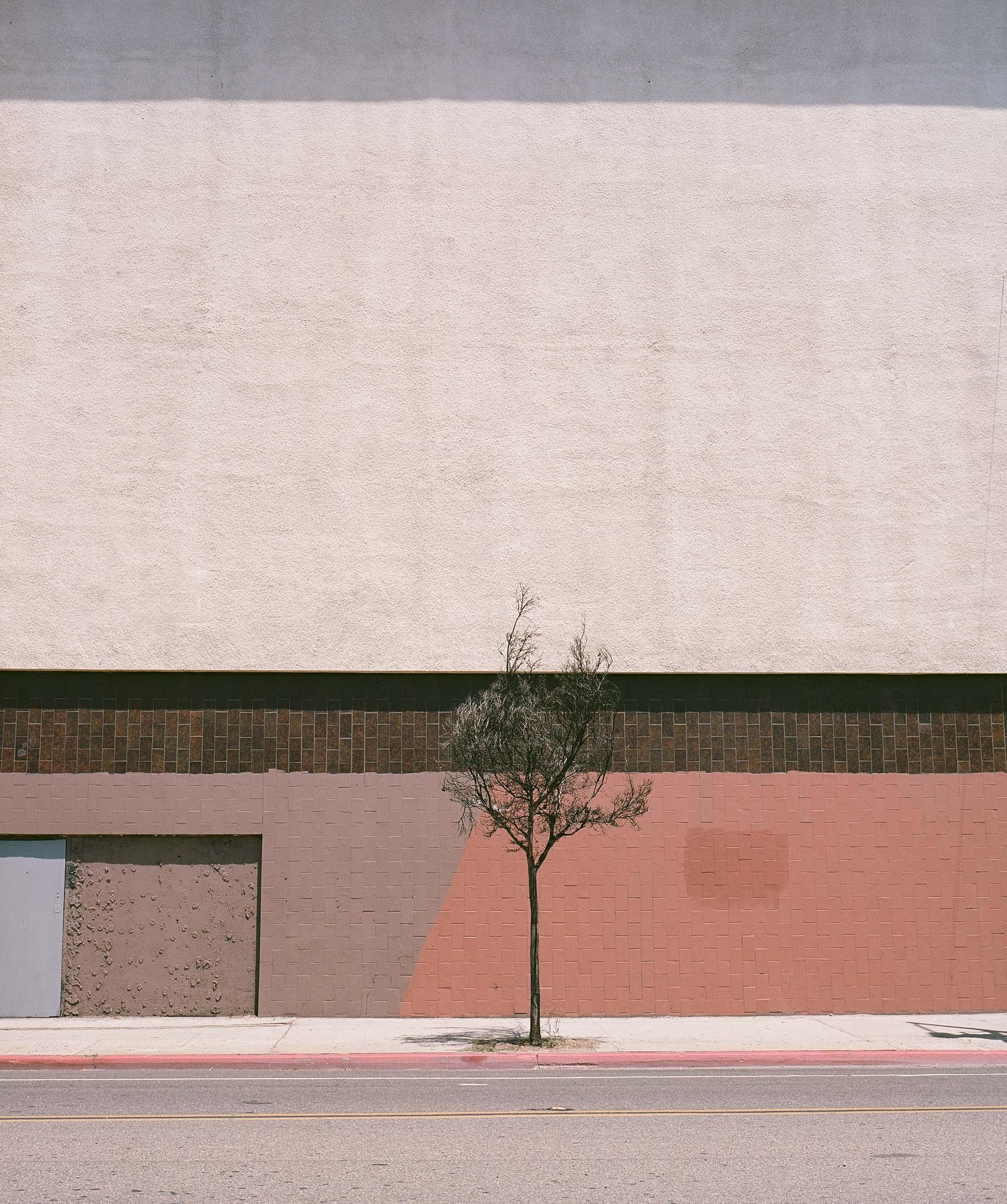 Tree_Wall.jpg