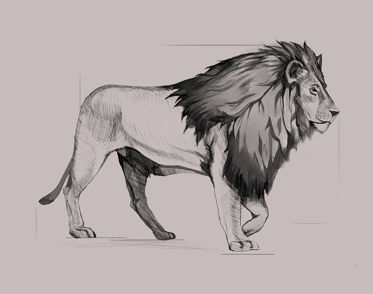 Lion_DLsDrawing.png
