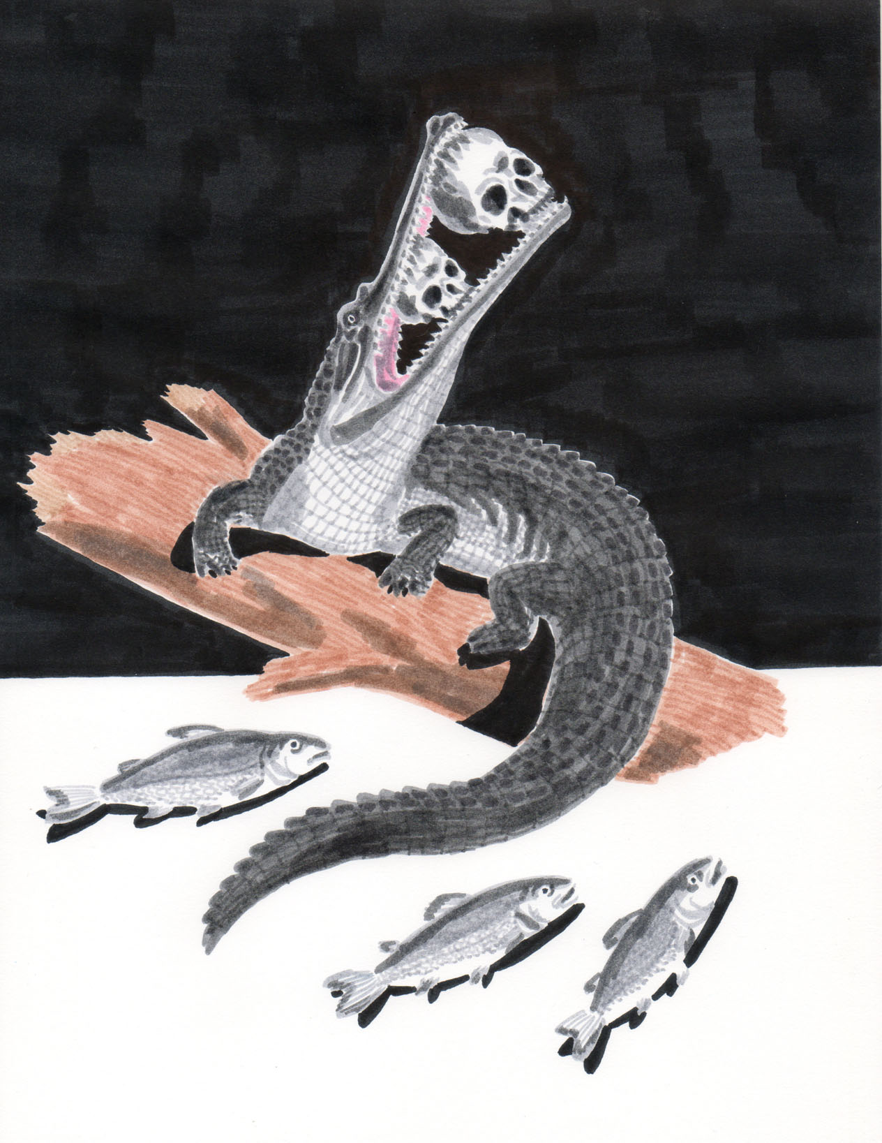 Grant Huang. Gharial, Two Skulls, Three Fish . Marker on paper. 12 inches x 14 inches framed. 2013.