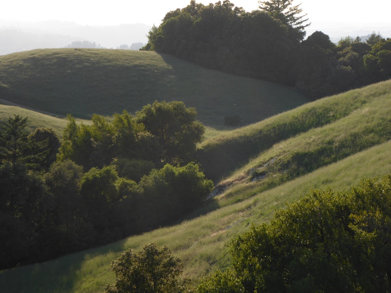 Ridge Grass.JPG