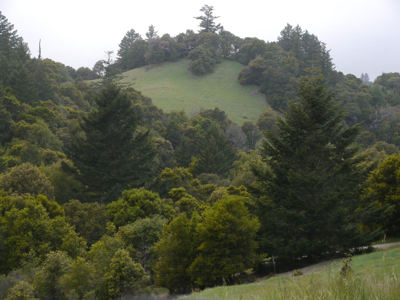 Ridge Meadow.JPG