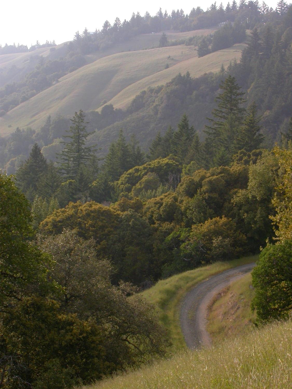 Ridge Path 2.JPG