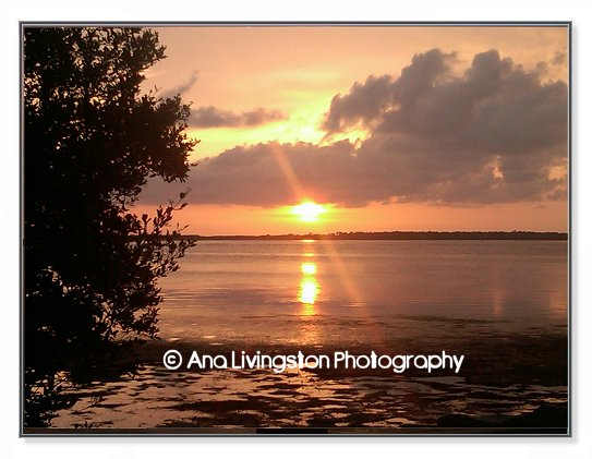 """Dunedin Marshes"", Dunedin, Florida Photography Copyright © 2014 by Ana Livingston. All Rights Reserved"