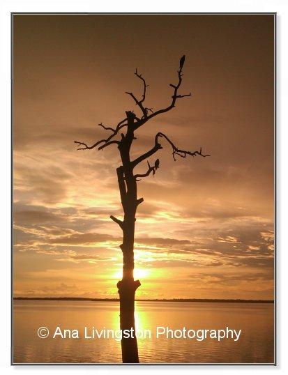 """4th of July"", Photo, Sunset in Dunedin, Florida"