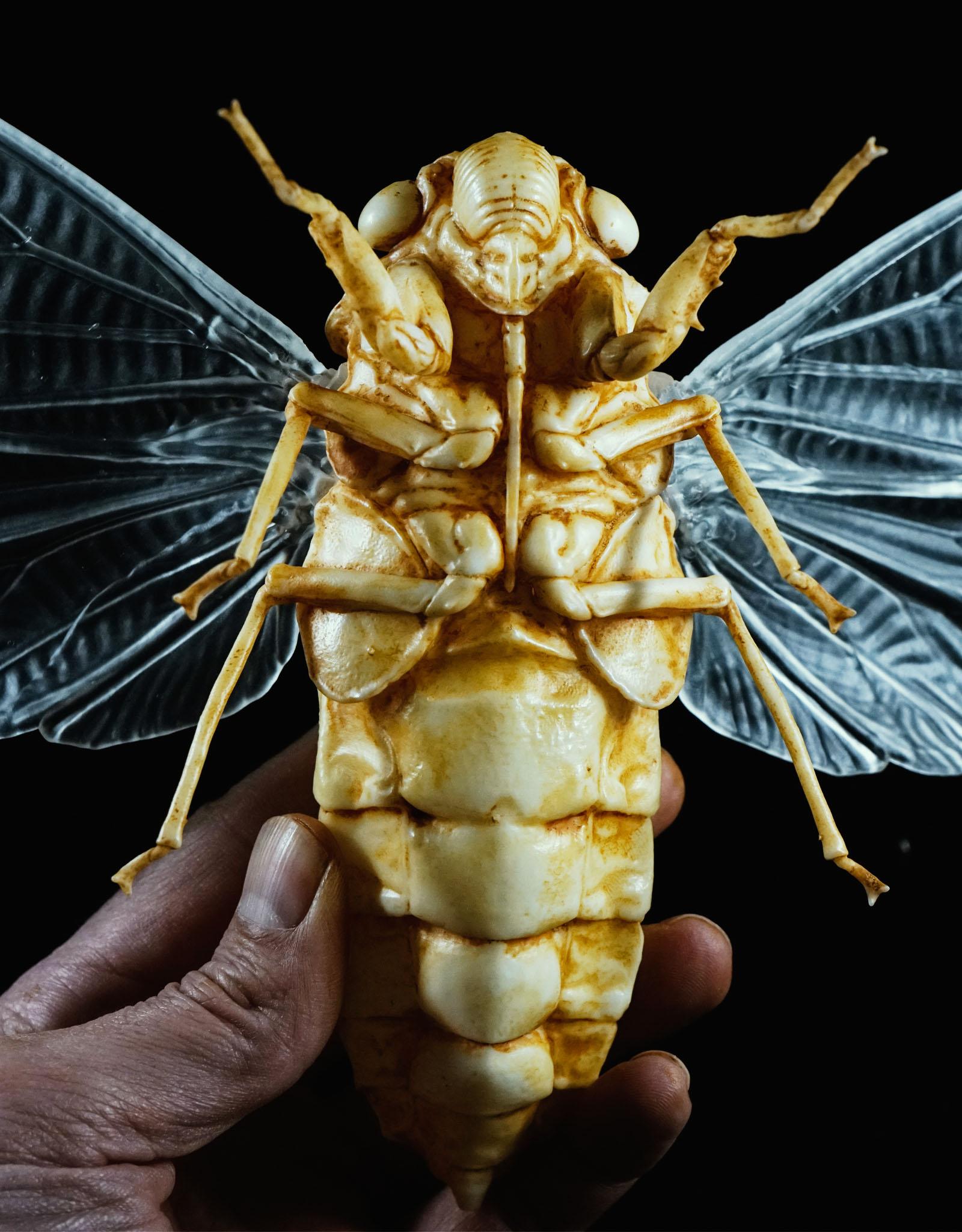 cicada_001.jpg