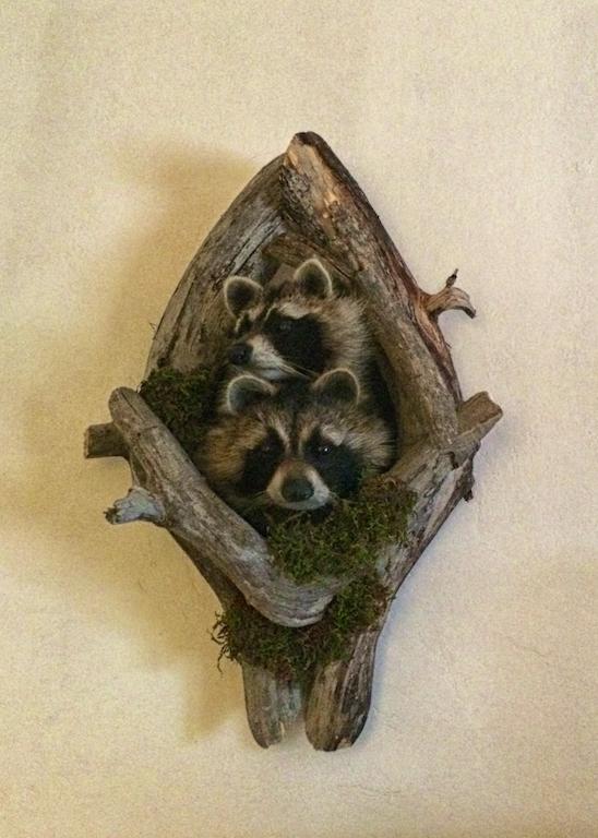 Raccoon Room.jpg