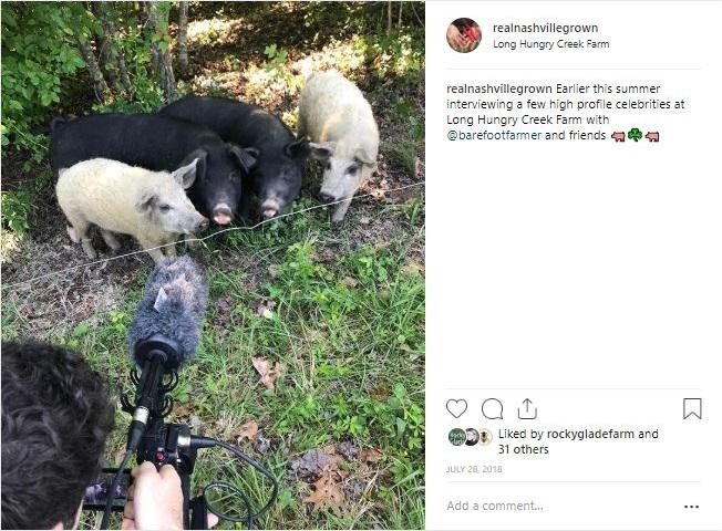 pigs+of+insta.jpg