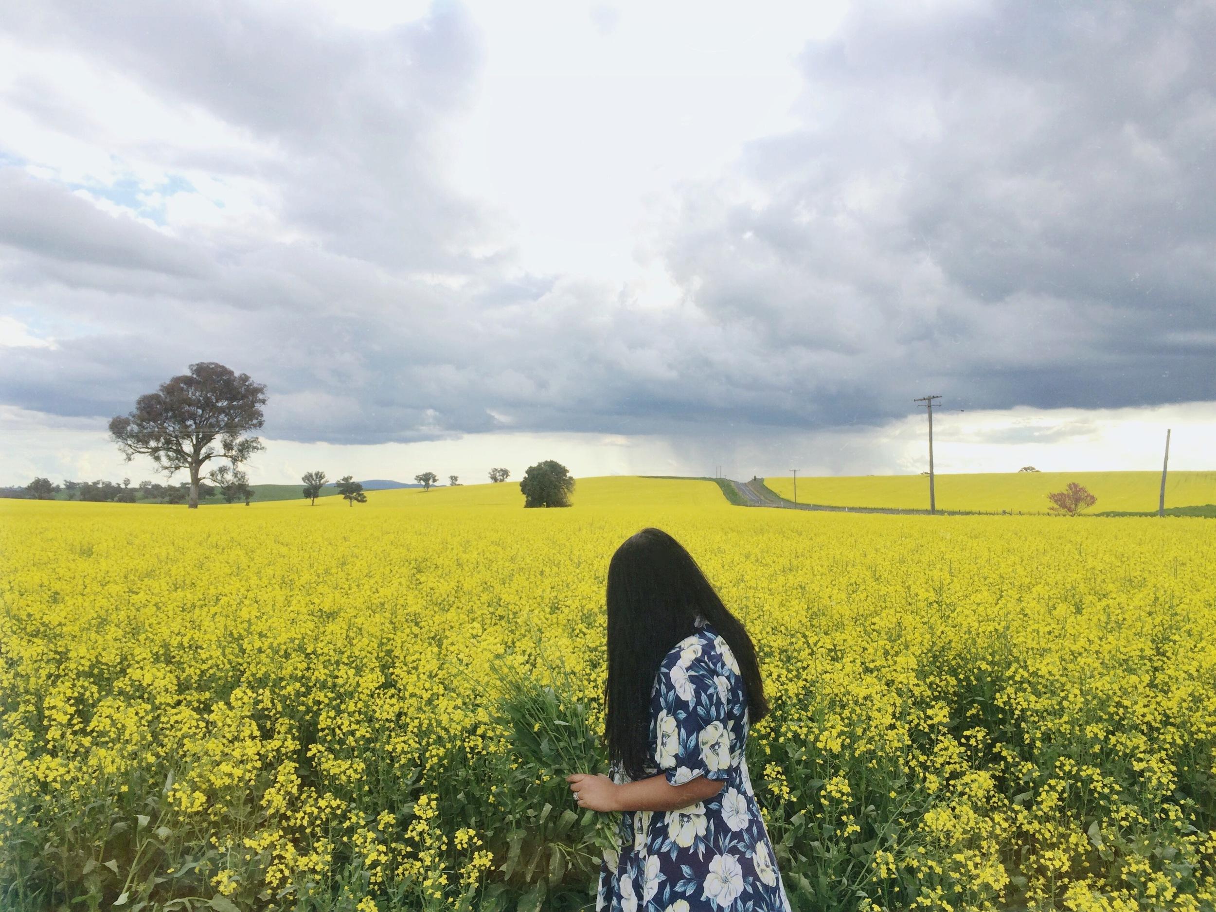 Canola fields in central western NSW.