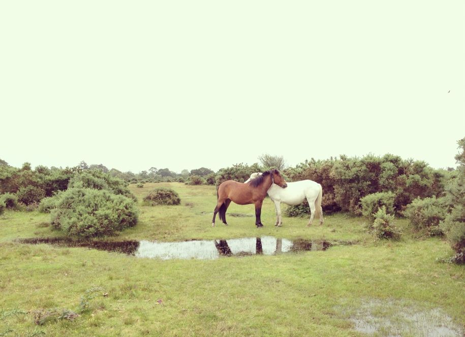 Horse soulmates.