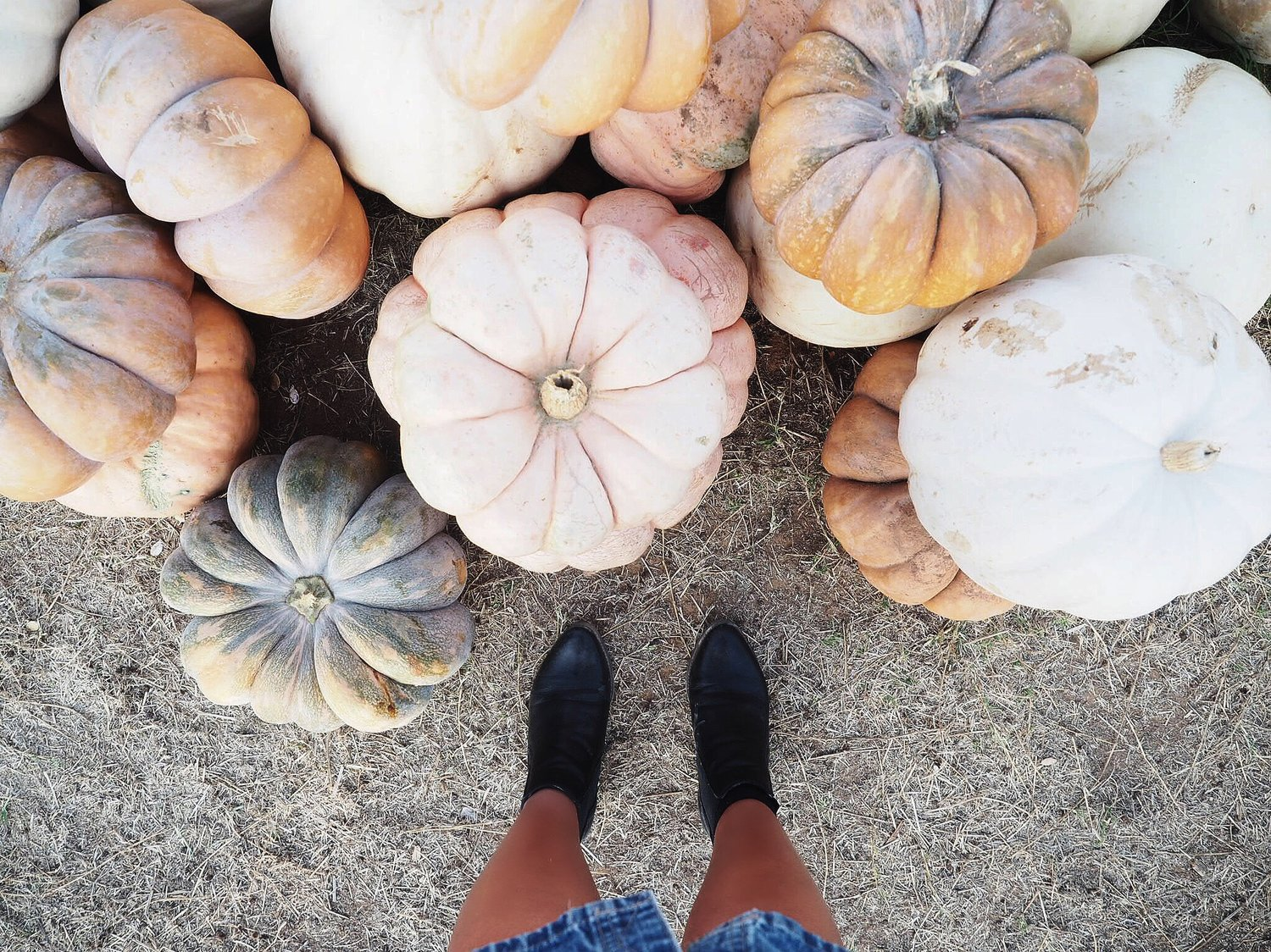 PHOTO DIARY:HALL'S PUMPKIN FARM -