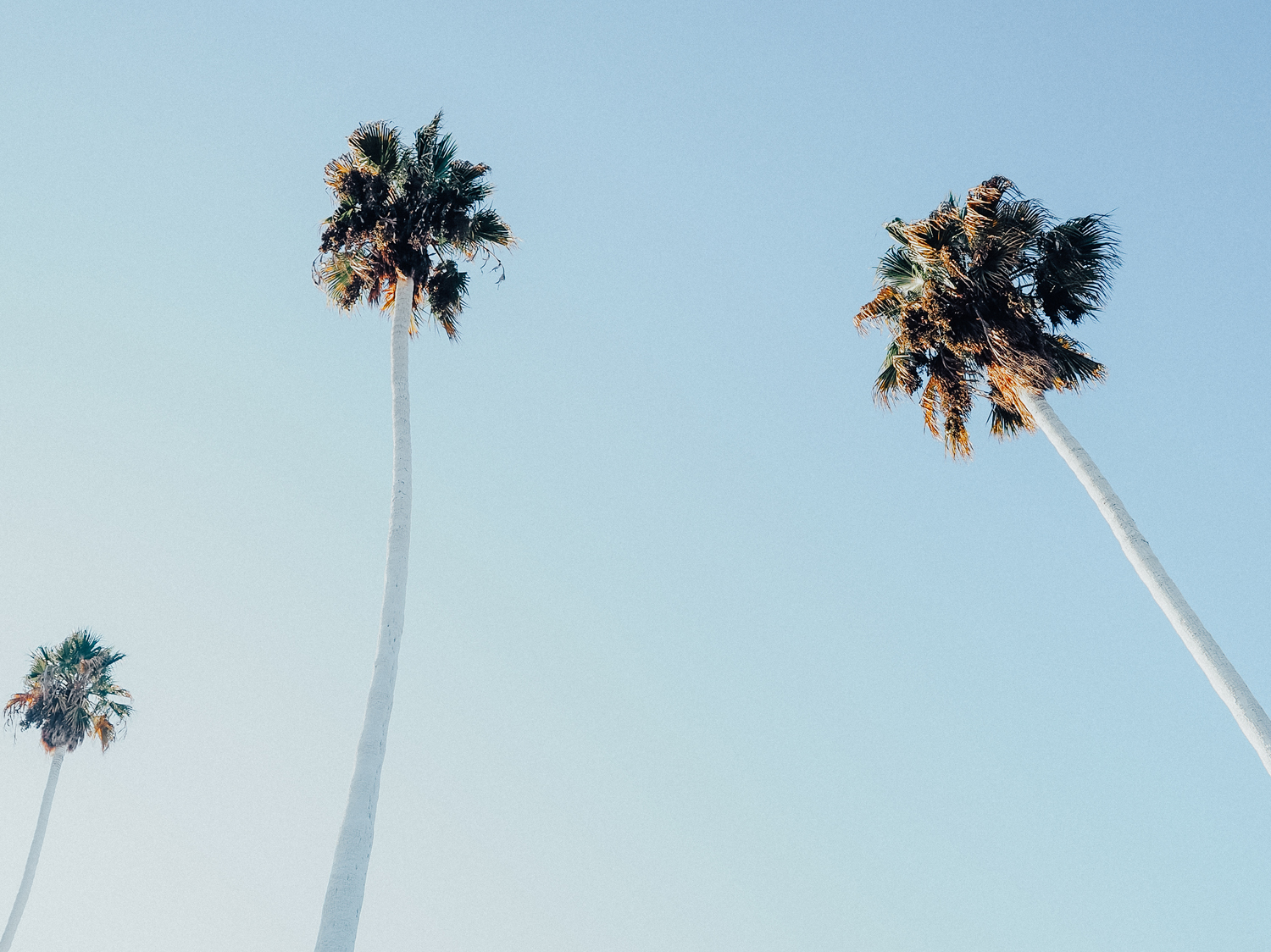 PLAYING AMID THE PALMS IN LOS ANGELES -