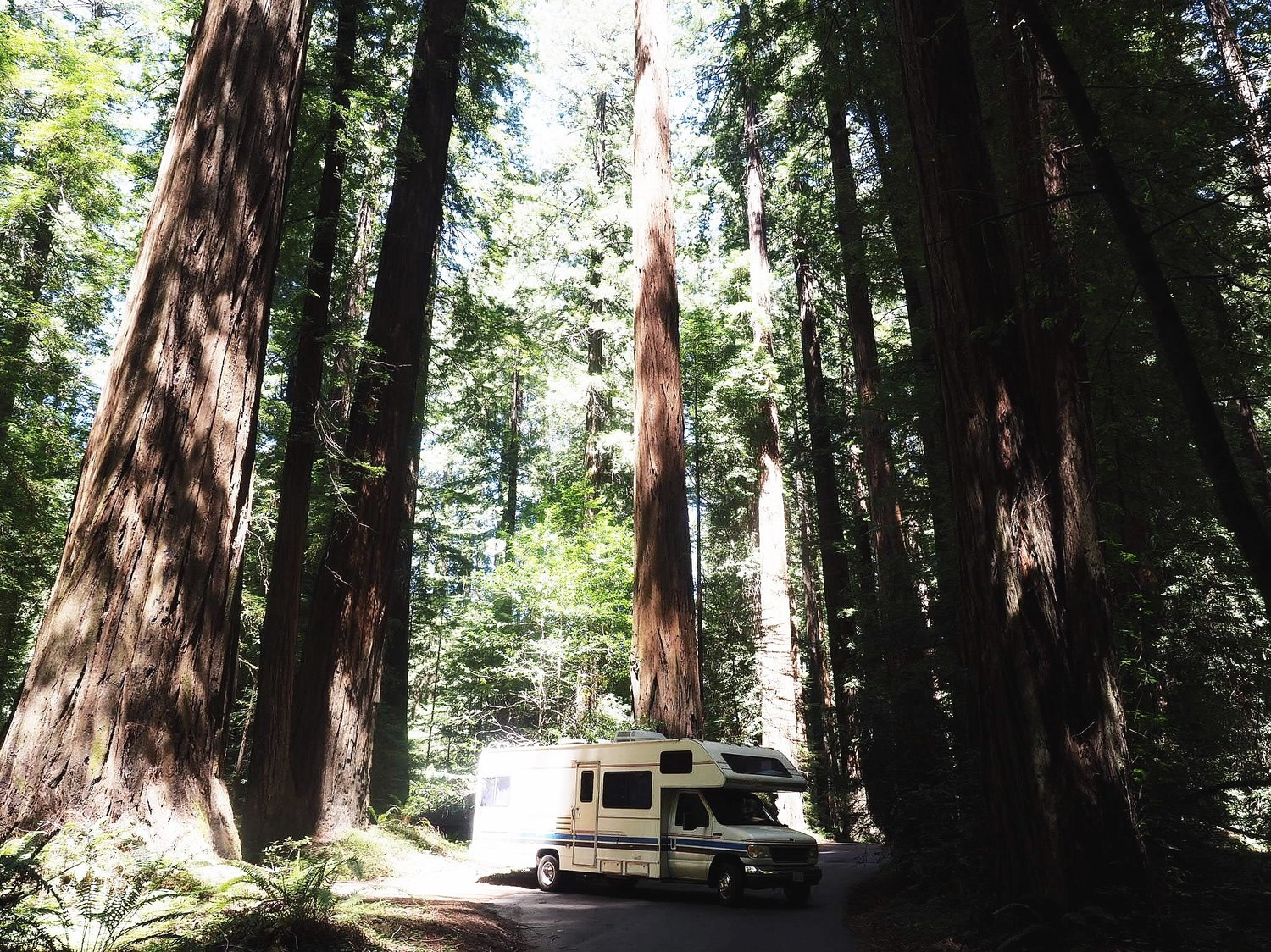 THE REMARKABLE REDWOOD TREES OF CALIFORNIA -