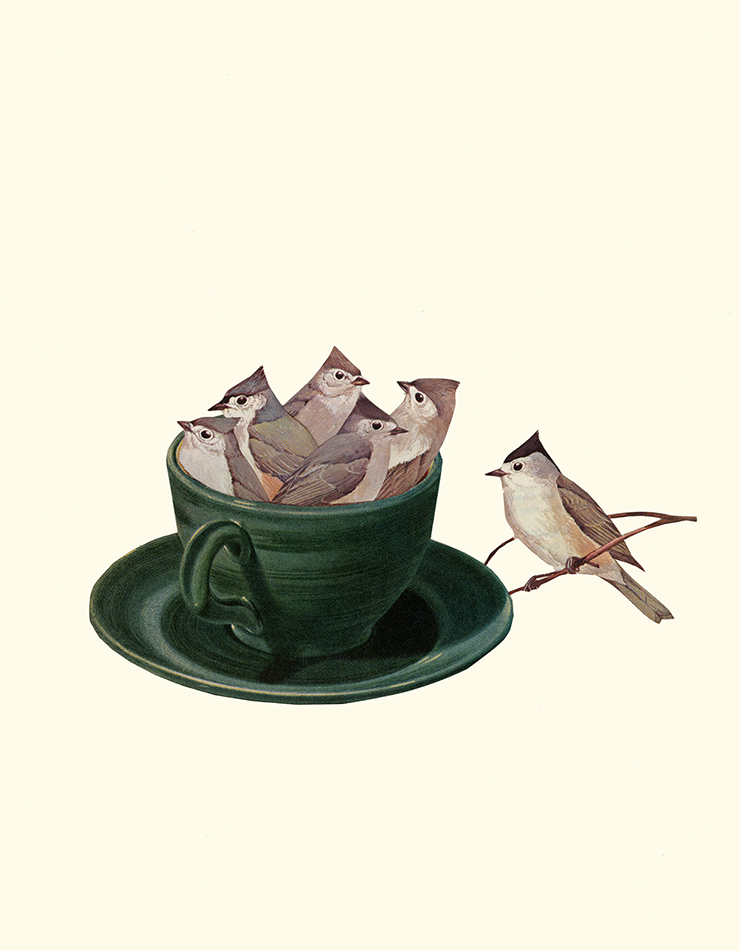 Titmouse Tea