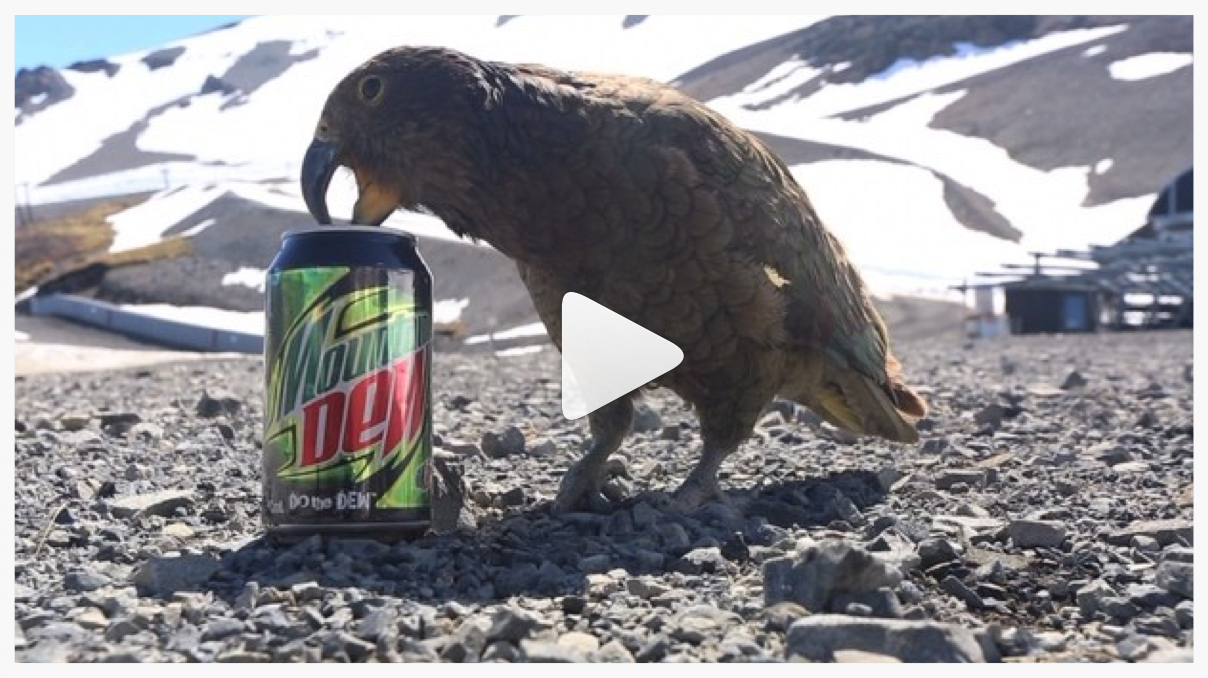Danny Davis  - Mountain Dew Kea Birds - New Zealand - 10/15/13