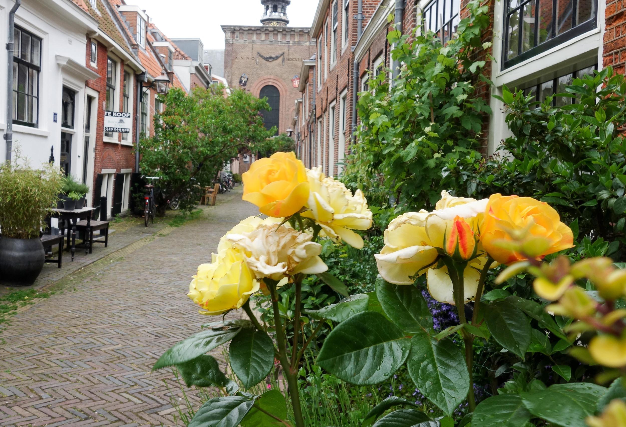 20150621_JudysBooksandBakery_Haarlem4.jpg