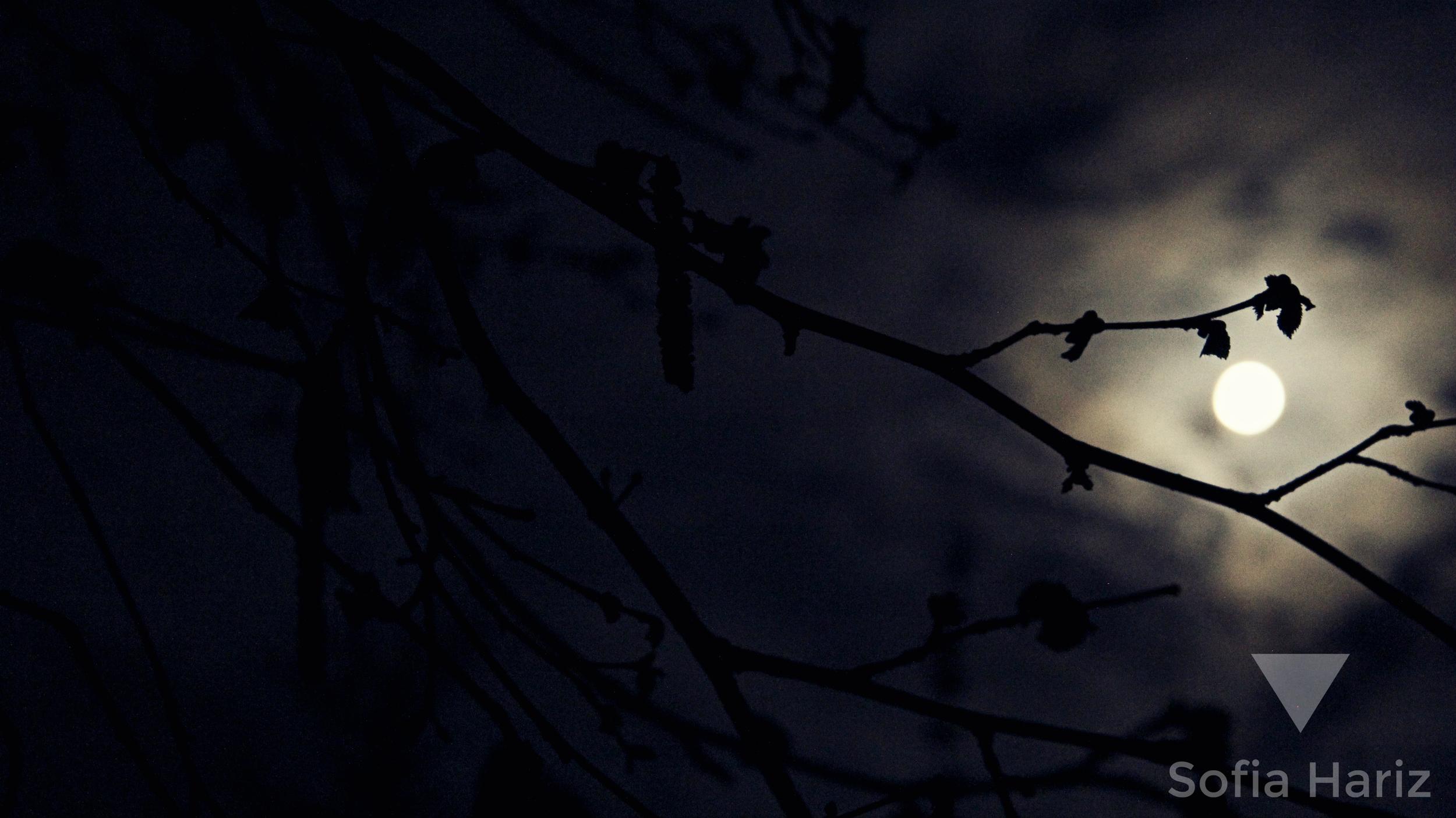 Moon, London 2014
