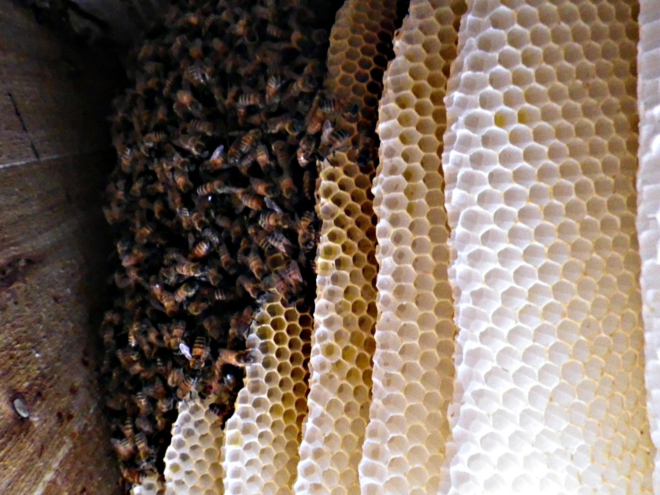 Bees at home.jpg