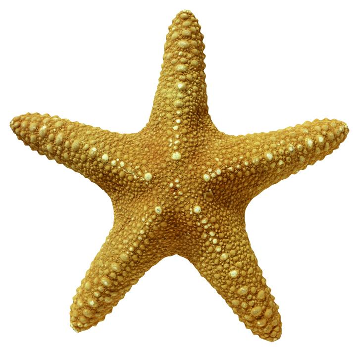 starfish_2001.jpg
