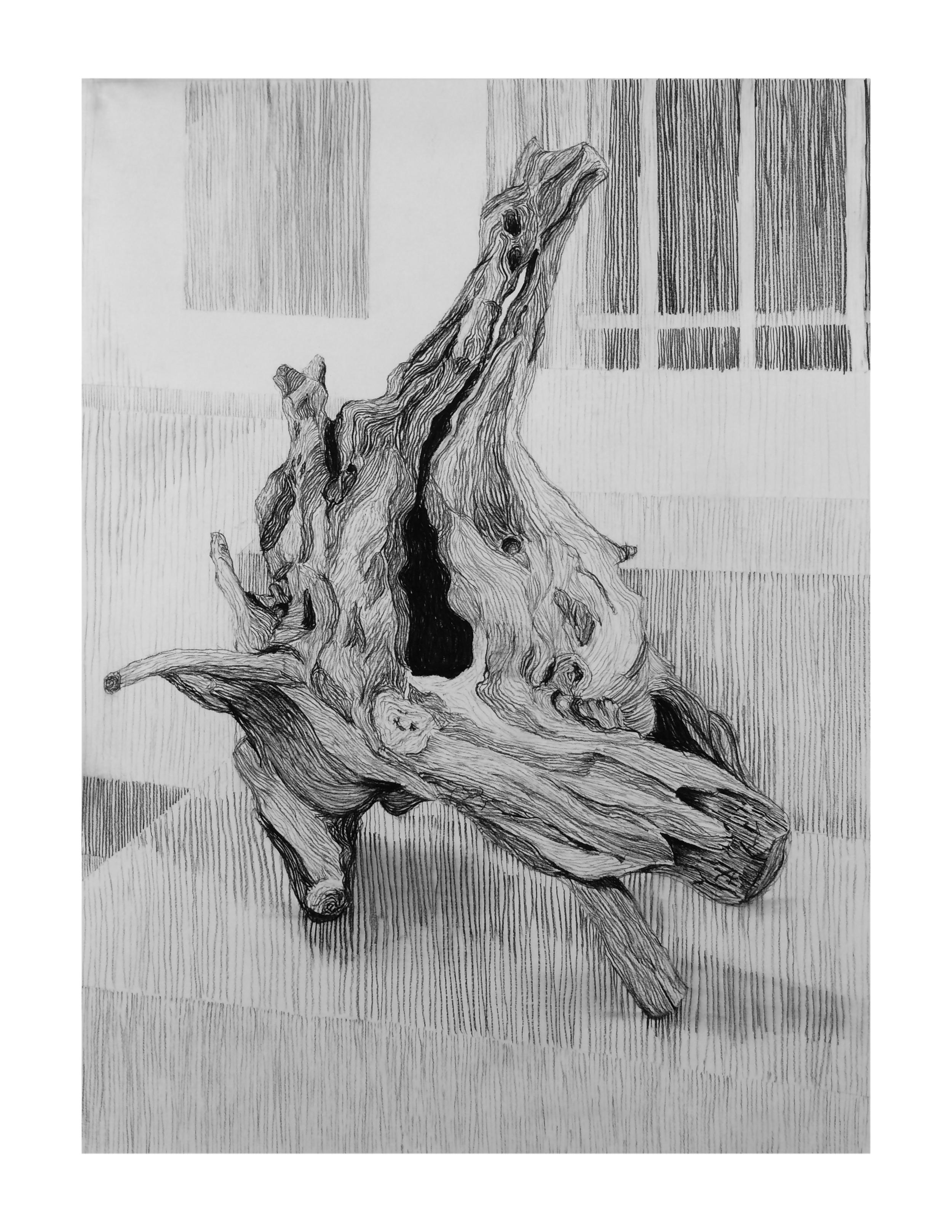 34-treeroot.jpg