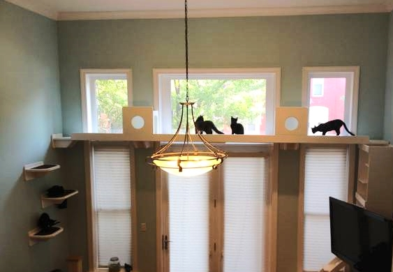 Cats are forever finding new adventures in bookcases and rafters. Companies like ' The Vertical Cat ' have created customized cat structures to place in your home.