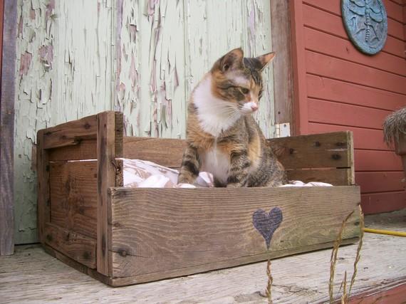 cat-bed-pallet.jpg