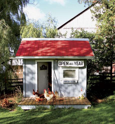 chicken coop 3.jpg