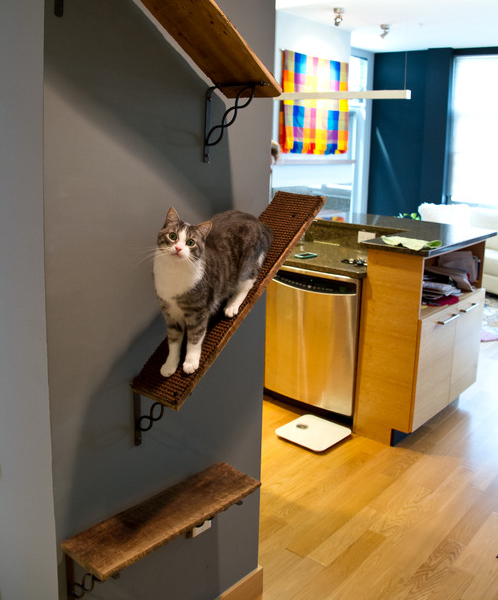 Or try it out yourself with some awesome wooden shelving.