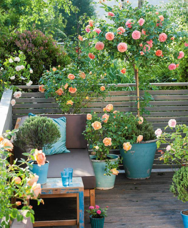 small-rose-garden_mini-e1442746576884.jpg