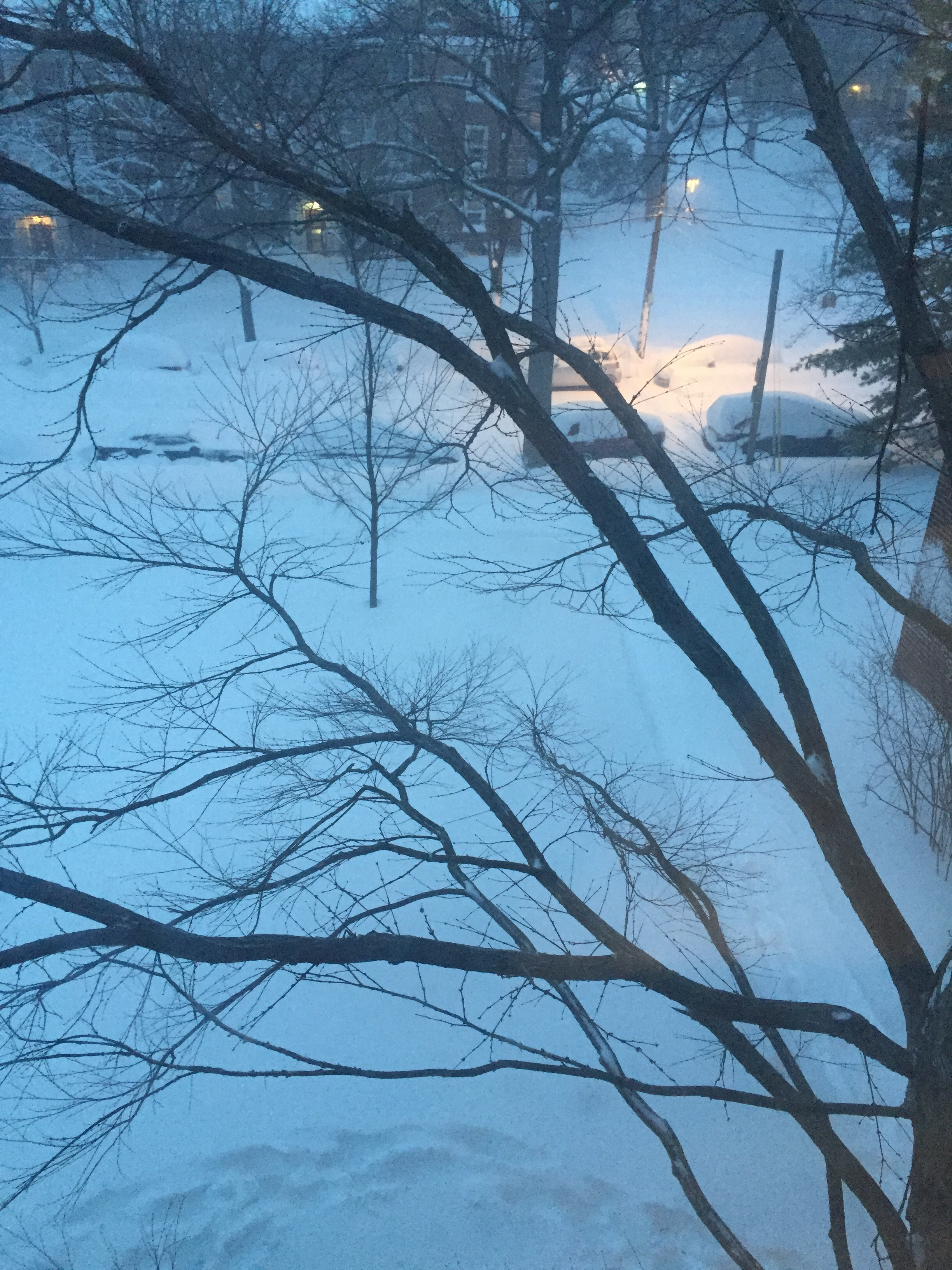 Winter Storm Jonas.JPG