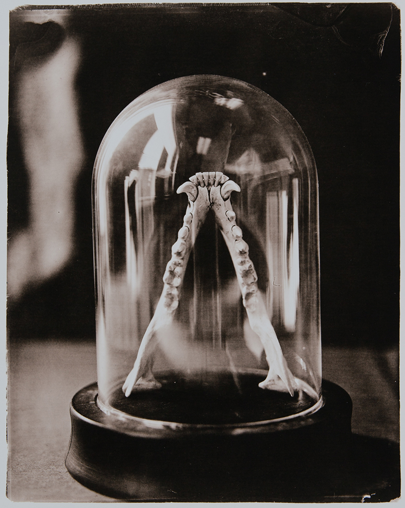 Lower Jaw   Joshua Meier  6x9, Edition of 5, signed and numbered Silver gelatin print $175