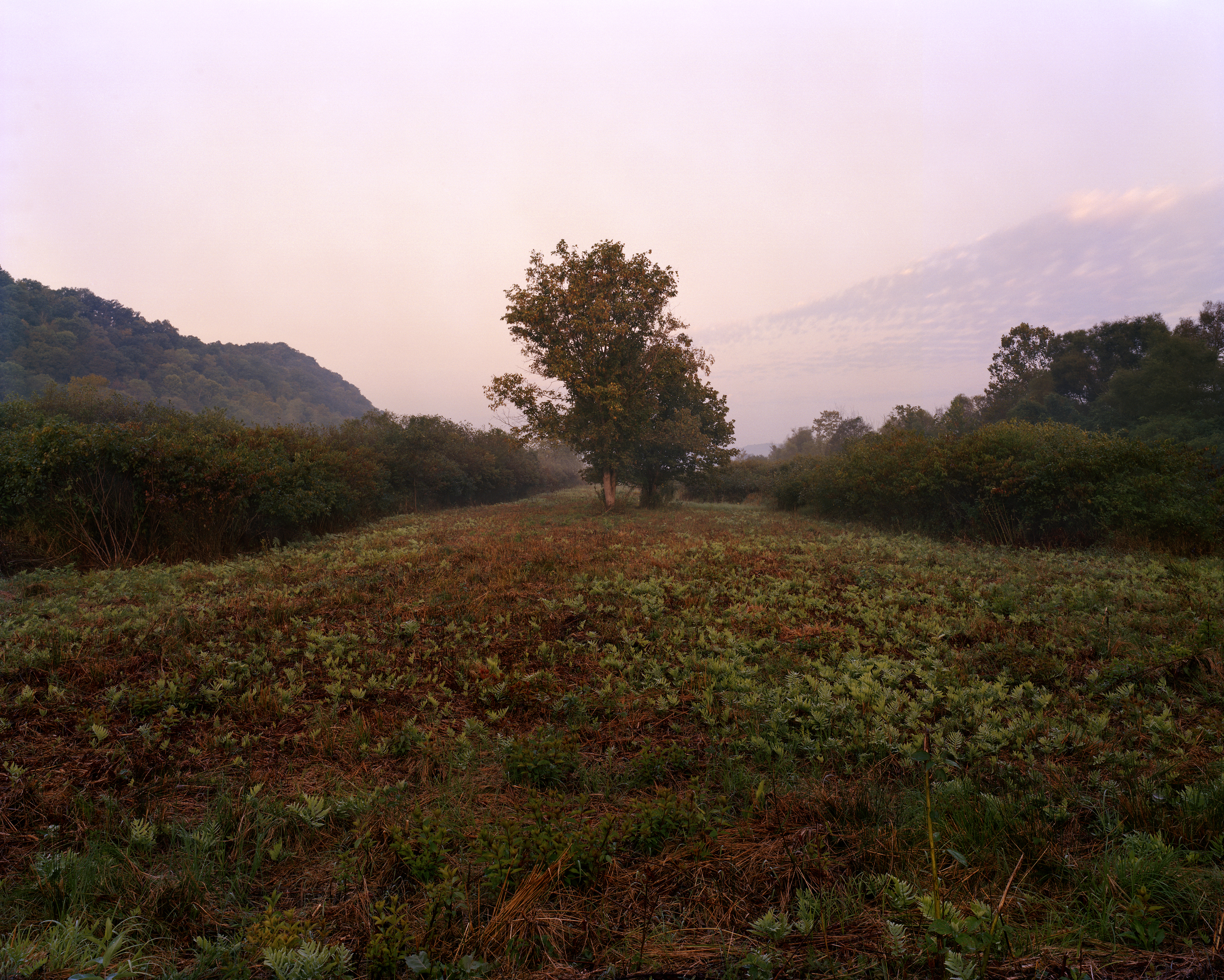 Cleared Meadow, Greenbottom Wildlife Management Area, WV, 2011  6 x 9, signed and numbered edition of 5 Archival inkjet print $95