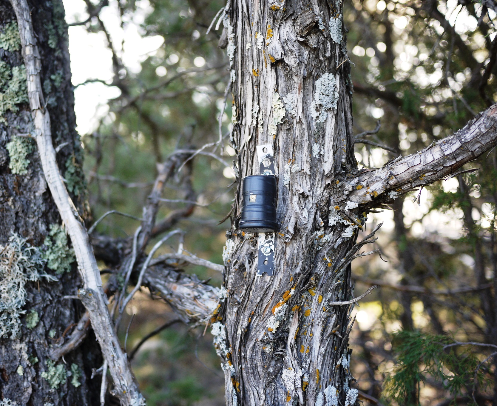 35mm can camera attached to a tree.