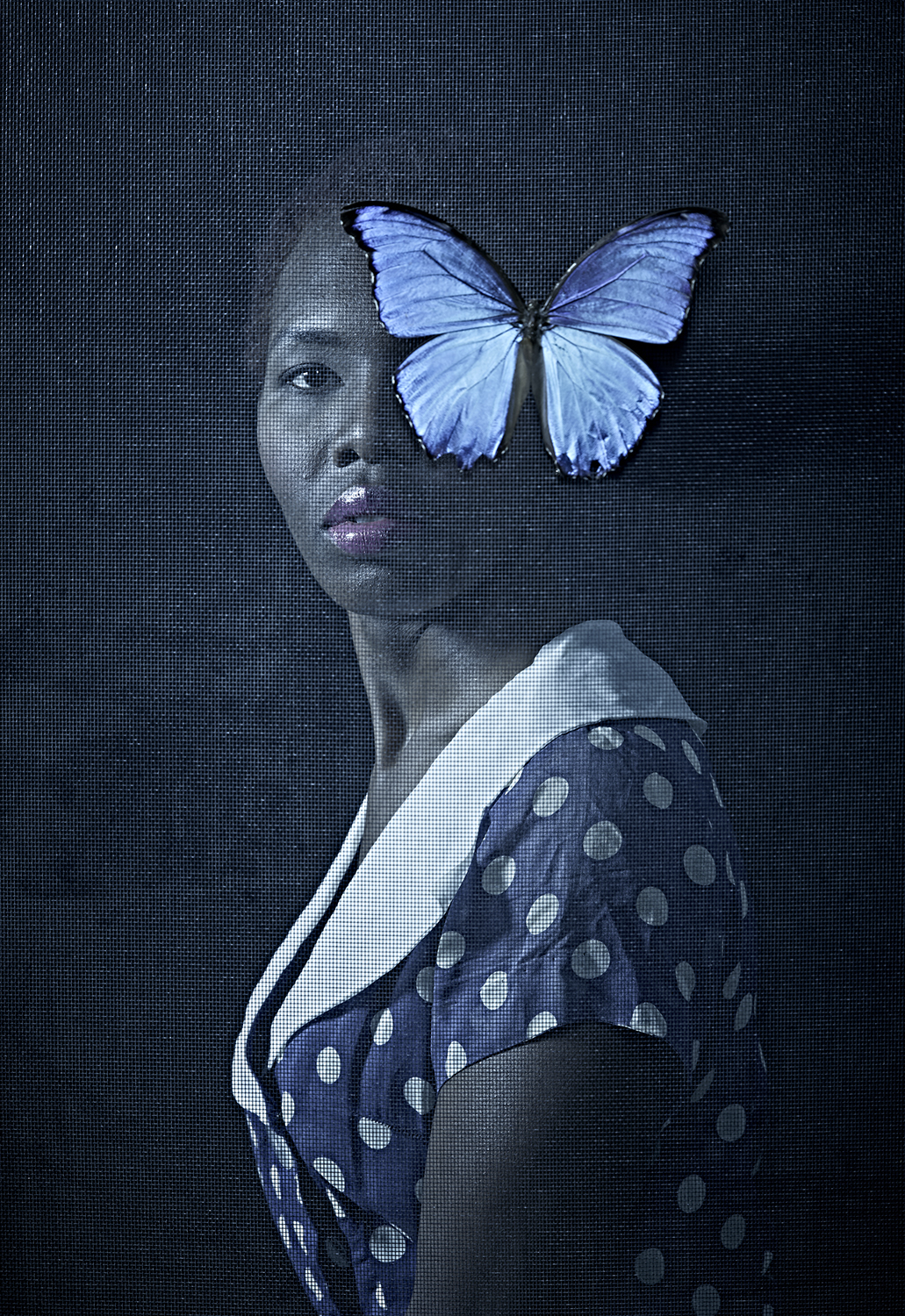 Butterfly   Maxine Helfman  6 x 9, Edition of 5, signed and numbered Archival inkjet print