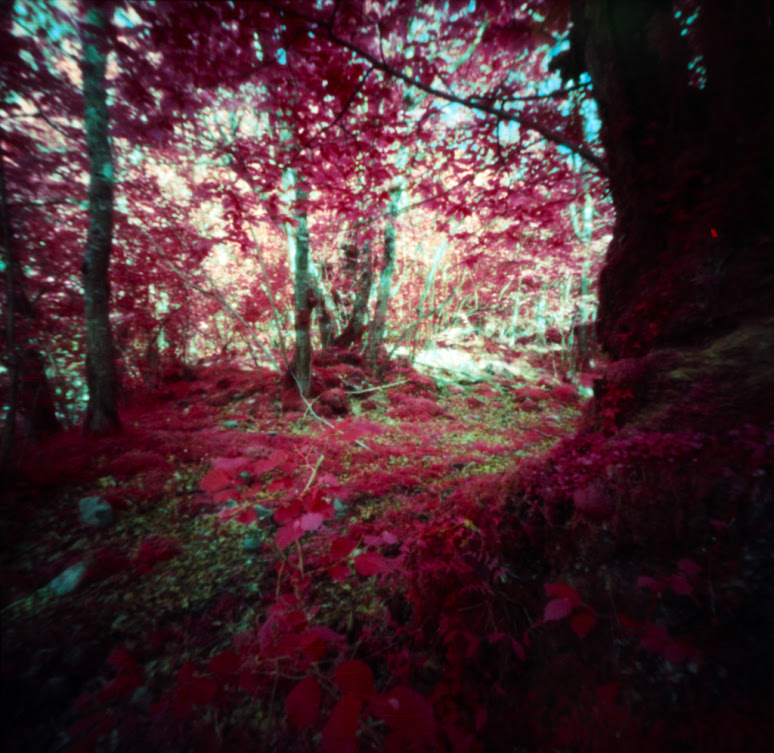 Woods in Red , made with modified pinhole camera with infrared film and orange filter