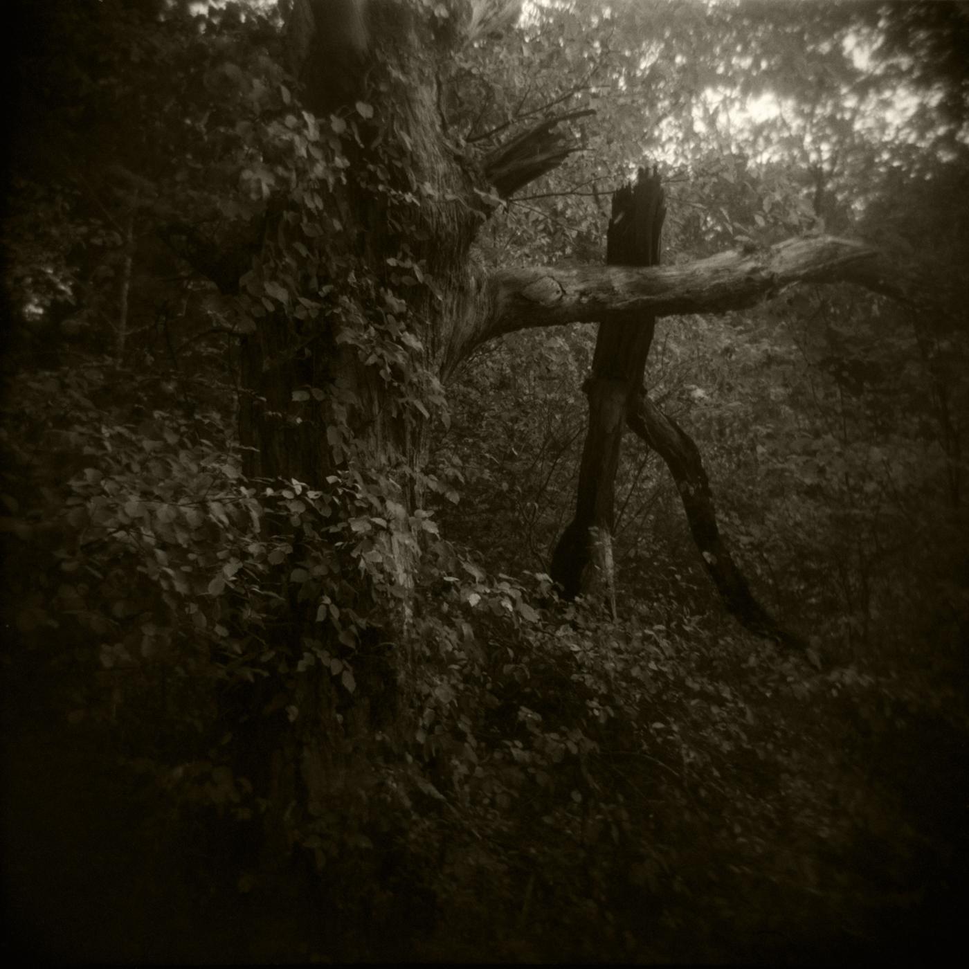 Trees 1, Medfield, MA