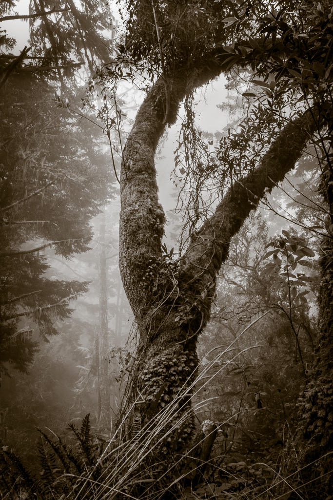 Mount Tamalpais Fog